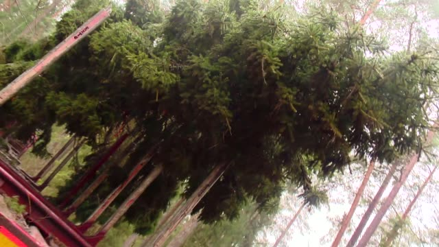 transporting cut down spruce - spruce stock videos & royalty-free footage