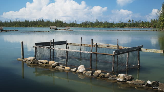 trap in a lagoon - huahine island stock videos and b-roll footage