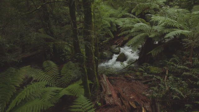 Travel Like a Local - Brief - In the Yarra Valley forest, Melbourne, Victoria