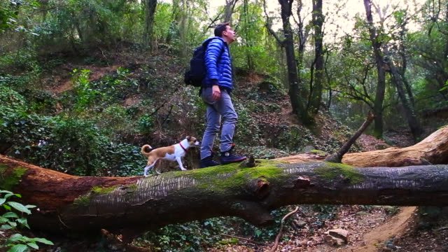 Traveler guy crossing creek over dead tree trunk in a mystical forest with enchanted nature with dog during travel adventure.