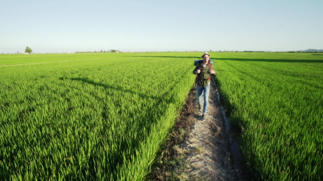 vídeos de stock e filmes b-roll de traveler man walking along green rice field. young adventurous adult traveling in an idyllic outdoors that could be placed in vietnam o china but filmed in spain. - visão frontal