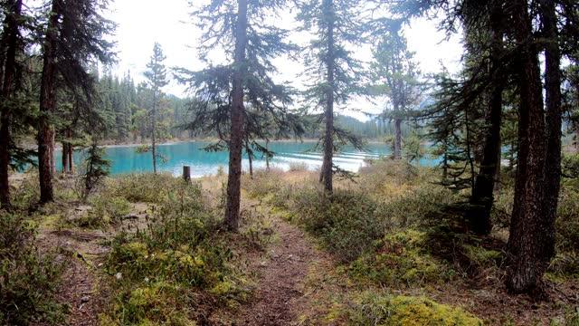 vídeos y material grabado en eventos de stock de viajero caminando en pinar al lago maligne en camping en el parque nacional jasper - pinaceae