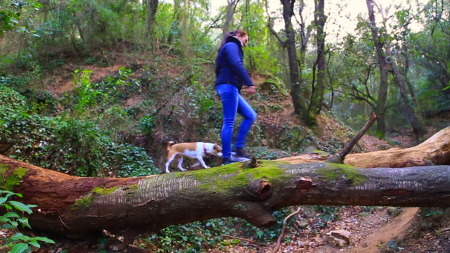 vídeos y material grabado en eventos de stock de traveler woman crossing creek over dead tree trunk in a mystical forest with enchanted nature with dog during travel adventure. - plano fijo