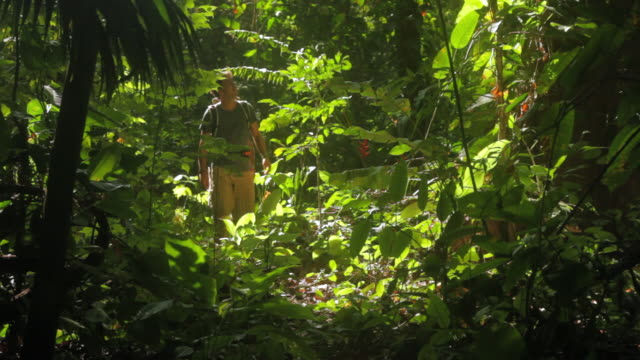 MS Travelers stopping to look at nature in tropical forest / Tyrona N. Park, Magdalena, Colombia