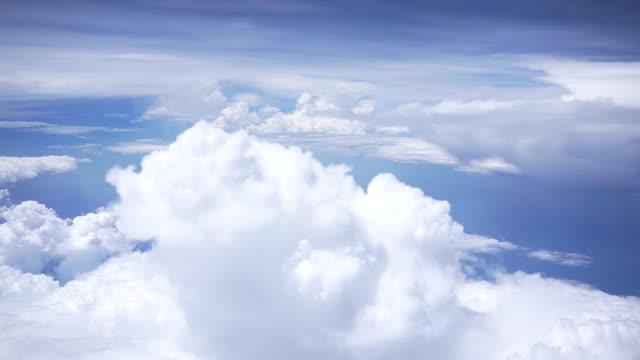 vídeos y material grabado en eventos de stock de viajando por el aire. - antena parte del cuerpo animal