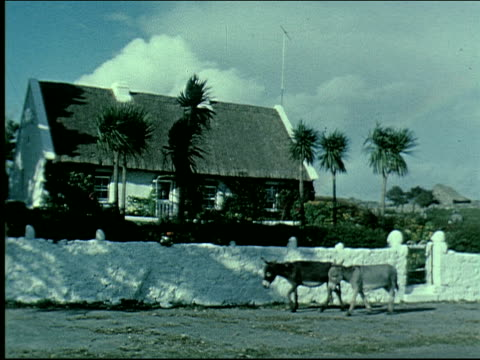 vidéos et rushes de 1962 traveling in ireland - mouton