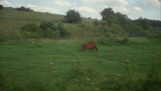 side pov traveling through green countryside, two horses running in field - animal markings stock videos & royalty-free footage