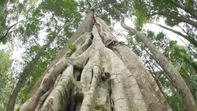 traveller touching big tree in the nature forest - origins stock videos & royalty-free footage