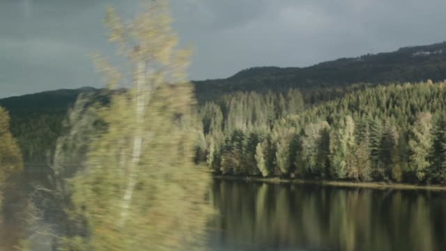 travelling shot past river and forest in tromso - evergreen stock videos & royalty-free footage