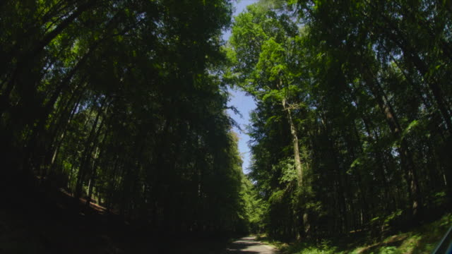 travelling shot pov up forest tree trunks to crowns against blue sky - tree canopy stock videos and b-roll footage