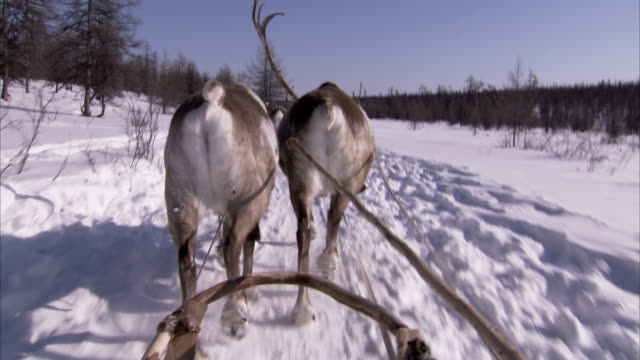 travelling through a snowy landscape on a sledge pulled by reindeer. available in hd - sledge stock videos & royalty-free footage