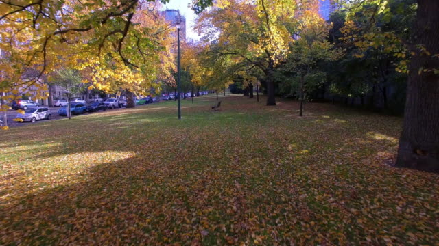 Travelling through the rich orange and yellow colours of autumn in a park in Melbourne