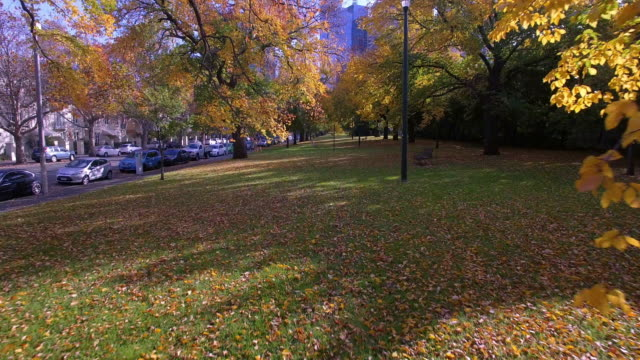 stockvideo's en b-roll-footage met travelling through the rich orange and yellow colours of autumn in a park in melbourne - david ewing