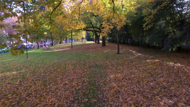vídeos de stock e filmes b-roll de travelling through the rich orange and yellow colours of autumn in a park in melbourne - david ewing