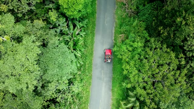 travelling trough jungle with sunroof. aerial view - panama stock videos & royalty-free footage