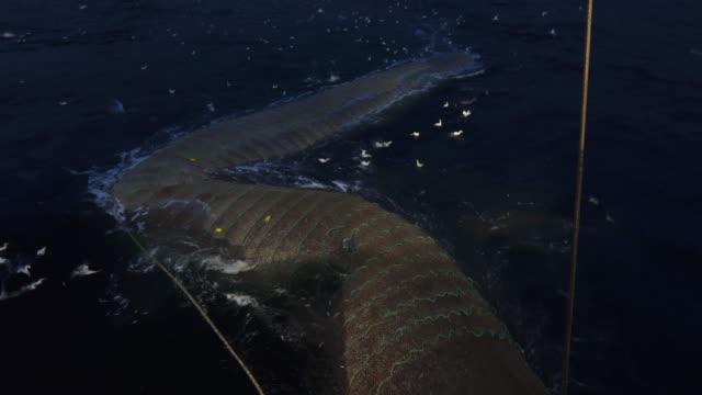 vídeos y material grabado en eventos de stock de red de pesca industrial trawl - red sea