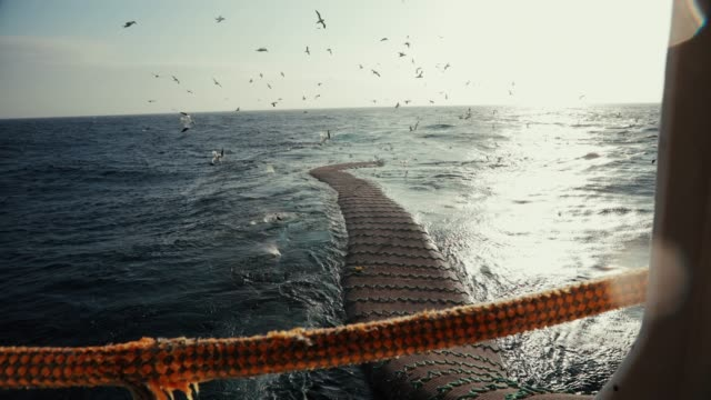 trawl industrial fishing net - peschereccio video stock e b–roll