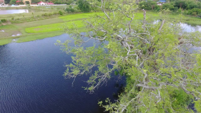 tree; aerial view turn around of tamarind tree on water. - air to air shot stock videos & royalty-free footage