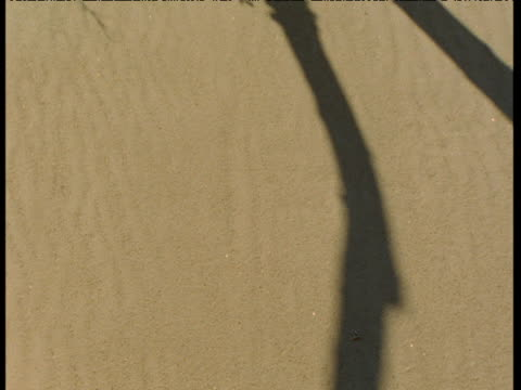 tree and grass shadows shift over sand, athabasca dunes, saskatchewan - saskatchewan stock videos and b-roll footage