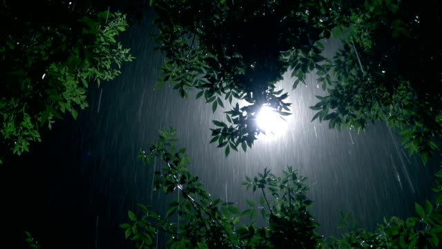 tree and lamppost in the rain at night - electric lamp stock videos & royalty-free footage
