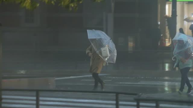 vídeos y material grabado en eventos de stock de tree and pedestrian in storm, tokyo, japan - lluvia torrencial