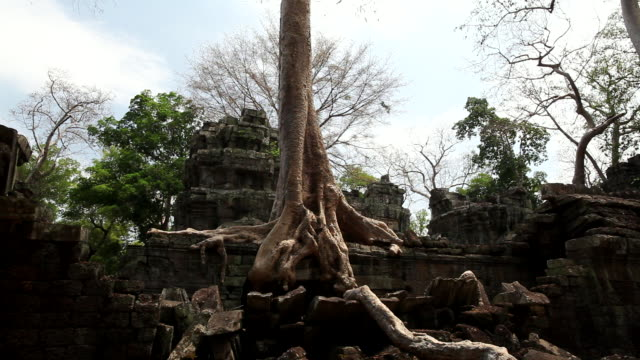 WS Tree and roots coming out of  ruble and ruins at Ta Prohm / Siem Reap, Siem Reap, Cambodia
