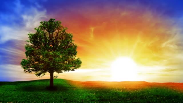 tree und sonnenaufgang - standbildaufnahme stock-videos und b-roll-filmmaterial
