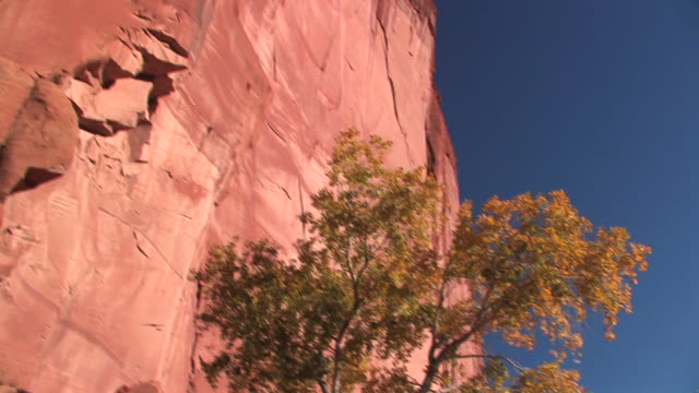 ms tree at bottom of rock wall/ tu pan rock wall/ canyon de chelly national monument, arizona - canyon de chelly stock videos & royalty-free footage