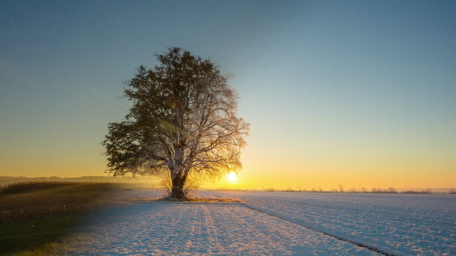t/l tree at sunrise in all four seasons - le quattro stagioni video stock e b–roll