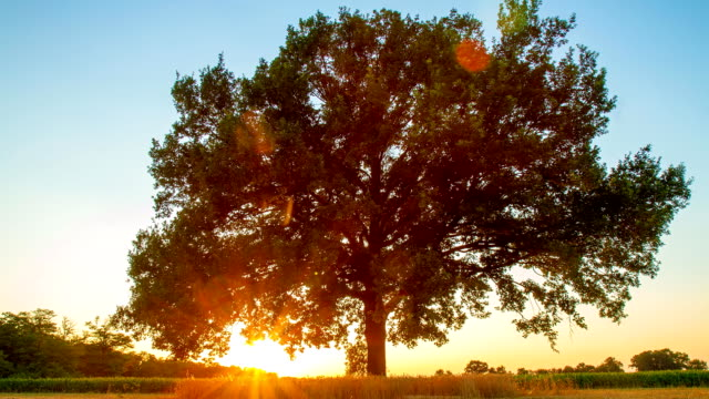 time-lapse in hd: albero all'alba - le quattro stagioni video stock e b–roll