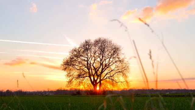HD MOTION TIME-LAPSE: Tree At Sunset