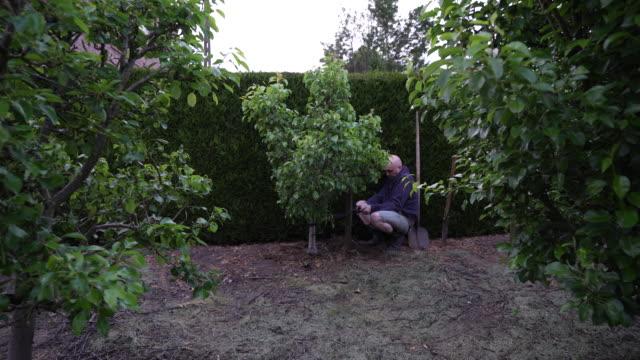 vidéos et rushes de tree band - arbre à feuilles caduques