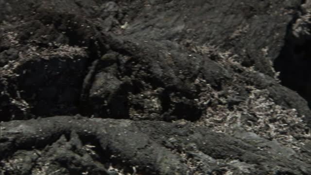 tree bark frames a tropical plant in kona, hawaii. - plant bark stock videos and b-roll footage
