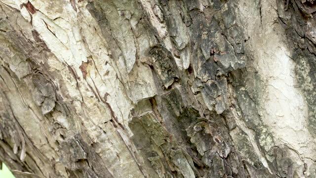 樹皮 - 木肌点の映像素材/bロール