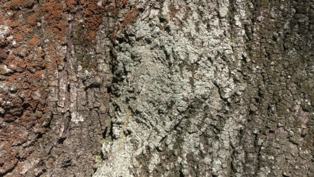 tree bark - bark stock videos & royalty-free footage