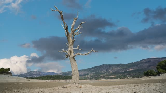 a tree became alone in steppe time lapse - natural disaster stock videos & royalty-free footage