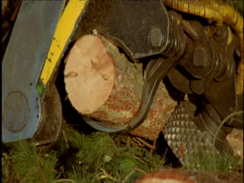 Tree being cut up in pine forest Thetford UK