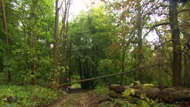 tree being felled in a gloucestershire forest due to ash dieback - work tool stock videos & royalty-free footage