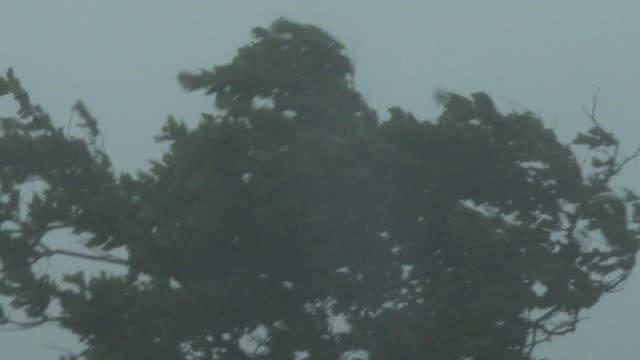 a tree bends in strong winds and heavy rain as a severe thunderstorm hits queens new york new york - scott mcpartland stock videos & royalty-free footage