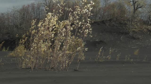 tree blowing in wind on ash plain, alaska, 2009 - ash tree stock videos & royalty-free footage