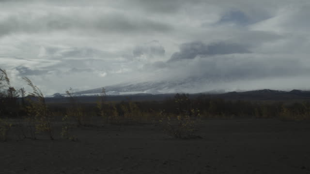 tree blowing in wind on ash plain with mountain in background, alaska, 2009 - ash tree stock videos & royalty-free footage