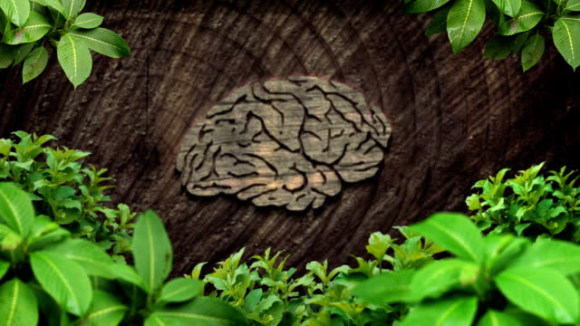 tree brain - tree trunk stock videos & royalty-free footage
