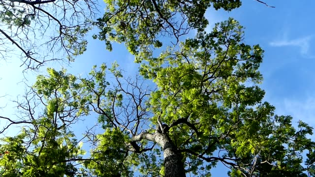 tree branch and blue sky - picnic stock videos and b-roll footage