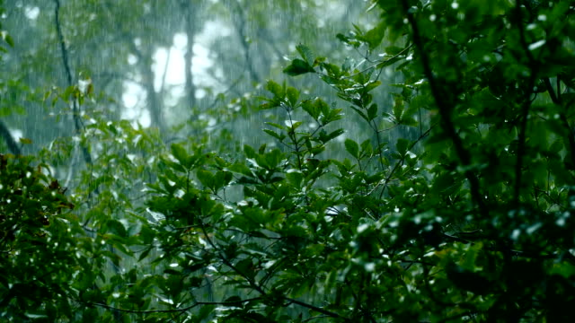 tree branch and leaf in the rain - pioggia video stock e b–roll