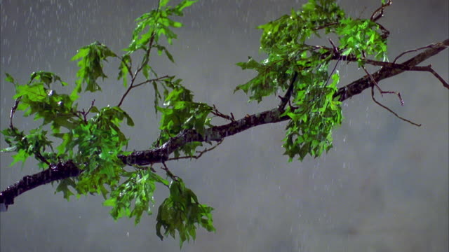 cu tree branch with green leaves shaking in wind and rain / canyon lake, texas, usa - canyon lake stock videos & royalty-free footage