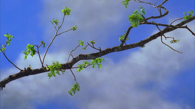 cu tree branch with green leaves shaking in wind / canyon lake, texas, usa - canyon lake stock videos & royalty-free footage