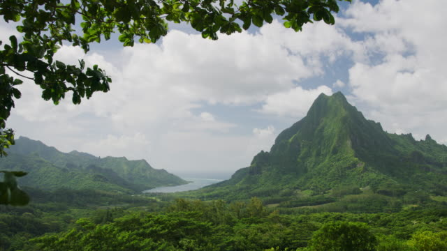 tree branches blowing in wind near scenic view of tropical mountain / moorea, french polynesia - tropical tree stock videos & royalty-free footage