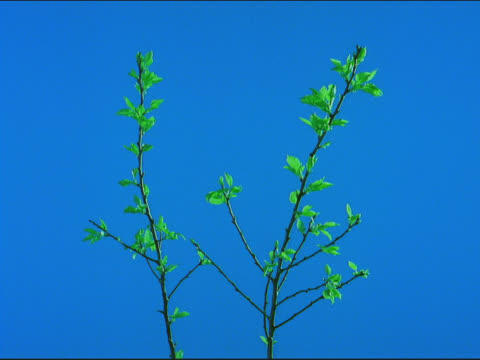 tree branches budding - sparklondon stock videos and b-roll footage