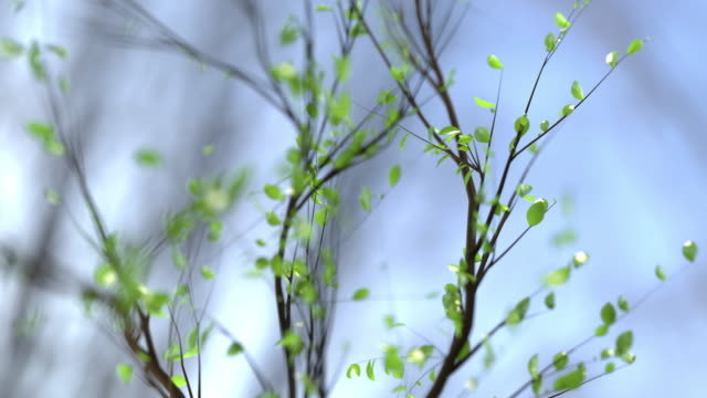 tree branches growth animation/timelapse - leaf stock videos & royalty-free footage