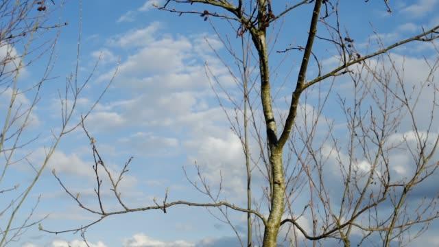 空の木の枝 - 四月点の映像素材/bロール